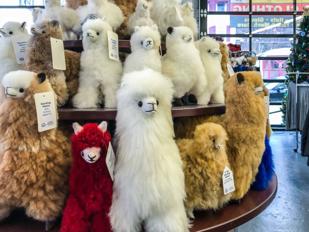 Alpaca stuffed animals and toys at Paca Gardens Little Falls NY | Mohawk Valley Today